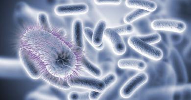 슈퍼박테리아